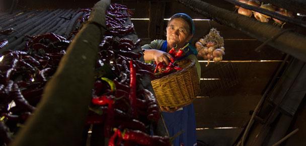 Patrimonio culinario y alimentario mapuche / Fotografía: Aldo Oviedo