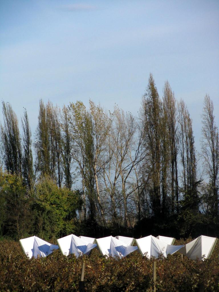 3. Centro de acopio y comedor para huertos de frambuesa. Autor Ximena Céspedes