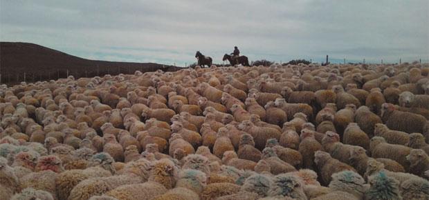 Arrieros de Tierra Del Fuego - Primer Lugar Enseñanza Básica 2015 - Javiera JacquelinFlores Ferreira - 6° Básico Escuela Rural Pampa Guanaco - Región de Magallanes