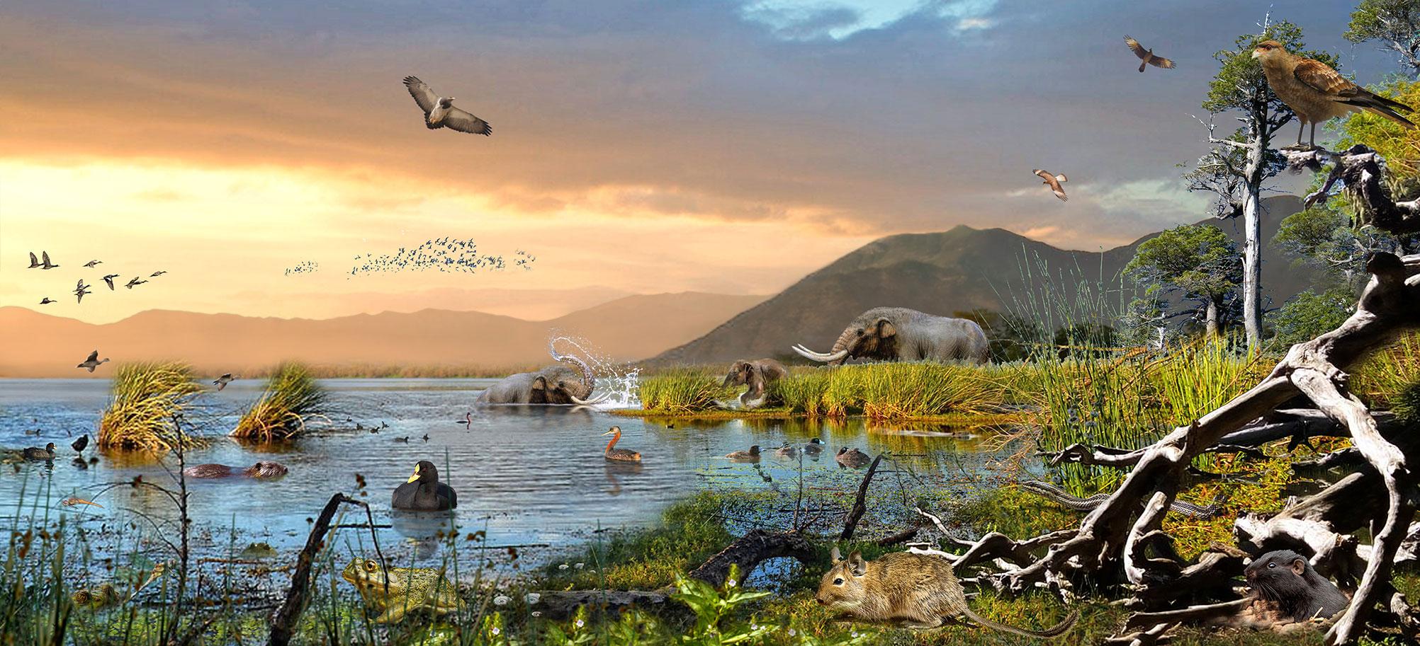 (Paisaje Fauna Laguna Tagua Tagua: Autor Mauricio Álvarez, proporcionada por NITT)